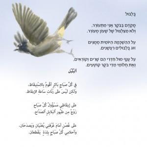 """דוגמה למהדורה דו-לשונית מתוך: """"בואו נכיר ציפורים"""", איור: רן לוי-יממורי"""