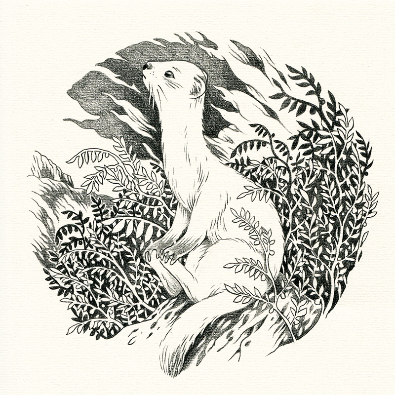 Ferret web