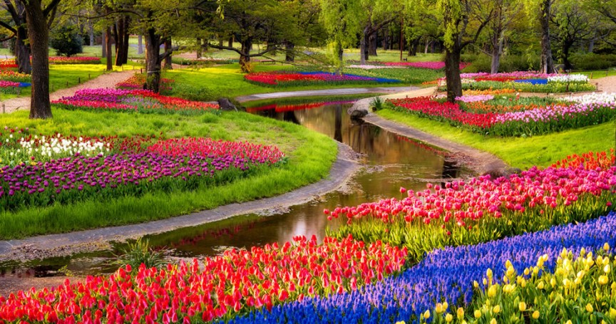 בין הפרחים בגן
